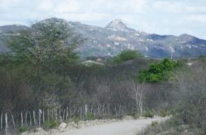 jurubeba-300x197 Homem se enforca na zona rural de Taperoá
