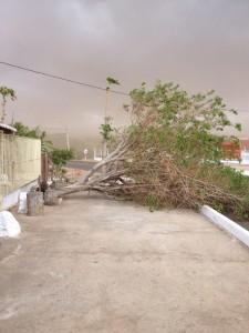 1058955_10205821361476360_1510467986_n-225x300 Aesa registra chuva e vento em cidades da Paraíba; choveu em pelo menos 20 cidades do Cariri