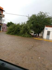 1419819_10205821360716341_647549578_n-225x300 Aesa registra chuva e vento em cidades da Paraíba; choveu em pelo menos 20 cidades do Cariri