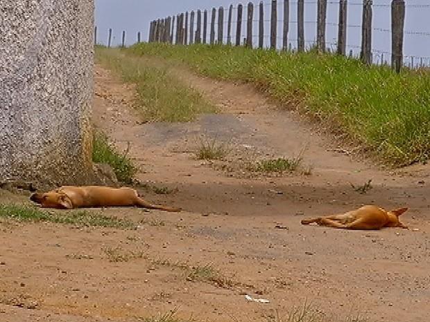 cachorro_2-300x225 Mais de 20 animais são mortos por envenenamento na zona Rural de Monteiro
