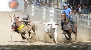 alex-vaqueiro-300x166 Supremo Tribunal pode proibir as vaquejadas em todo o País