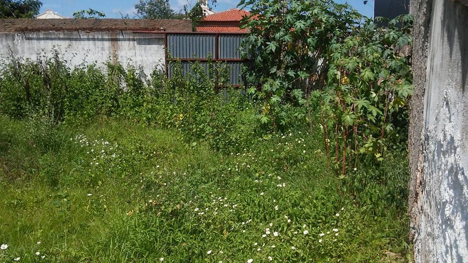 12728794_1115622295144619_2377955538087798411_n DENÚNCIA: Matagal toma conta da Secretaria de Saúde de Monteiro