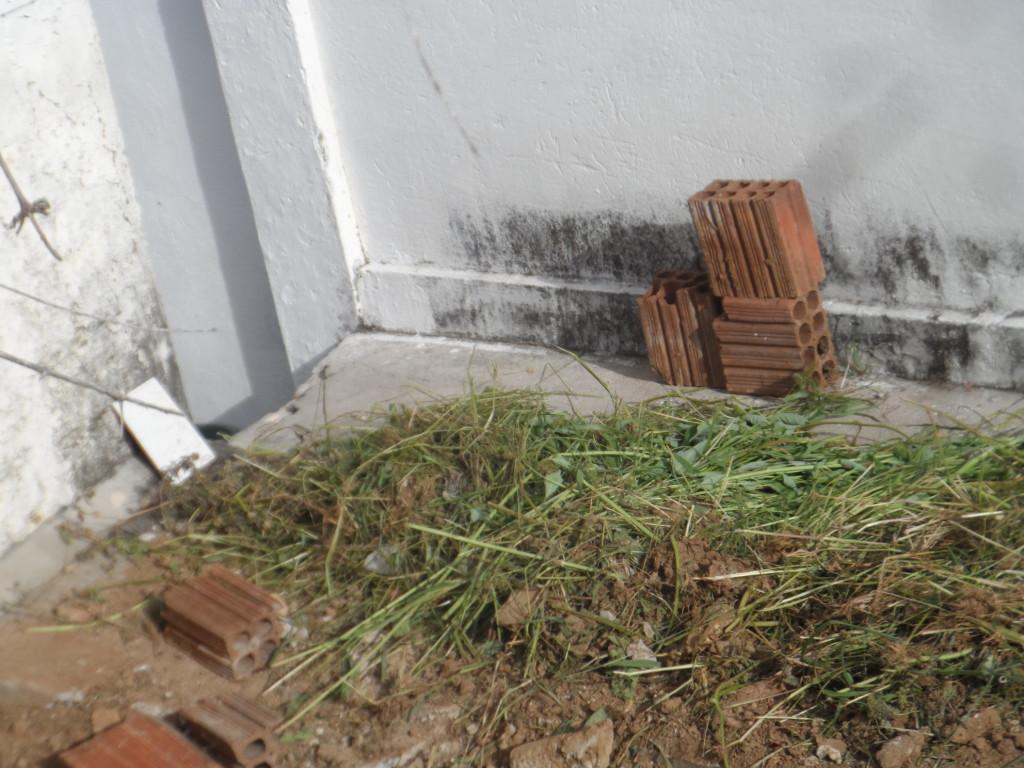 SAM_6209-1024x768 DENÚNCIA: Matagal toma conta da Secretaria de Saúde de Monteiro
