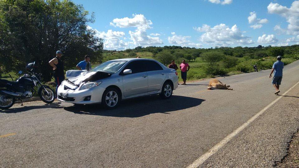 12961734_835943033184212_8571320856887874665_n-1 Exclusivo: Monteirense colide carro contra uma vaca em rodovia da PB