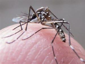 15231336280003622710000-300x225 Dengue e chikungunya podem ter causado 25 mortes em seis cidades da Paraíba