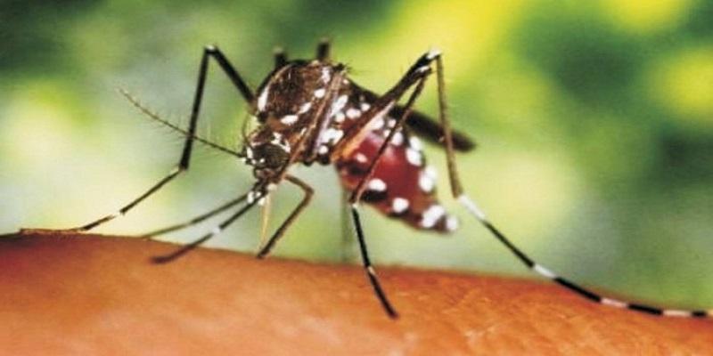 zica-virus-entenda-a-transmissao-os-sintomas-e-a-relacao-com-microcefalia-gb-73-a0f35 Médica diz que Chikungunya na PB é diferente de outros estados e cita Monteiro