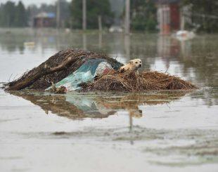 cao-310x245-300x237 Temporada de chuvas deixa 186 mortos e afeta 33 milhões na China