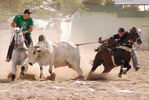 vaquejada-3-300x202 Juiz proíbe uso de animais durante Vaquejada do Parque Bem Mais
