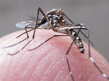 15231336280003622710000 Especialista explica porque o Aedes aegypti consegue transmitir diversos tipos de vírus