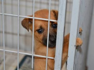 17219536280003622710000-300x225 Crime de abandono de animais pode ser denunciado de forma anônima; saiba como