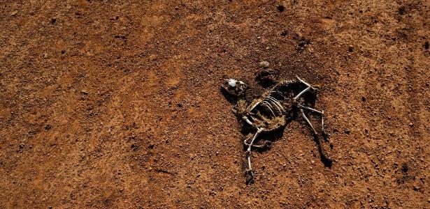 esqueleto-de-cabra-no-deserto-da-somalia-1497558048472_615x300 Africanas reduzem as refeições e lutam para sobreviver antes de pedir ajuda ao mundo