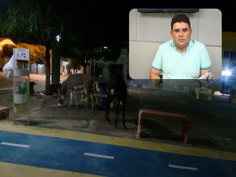 jegue-em-sao-joao-do-tigre-300x225 Jumentos soltos nas ruas de São João do Tigre causam transtornos e riscos de acidentes à população
