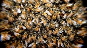 images-6 Agricultor morre após ser atacado por abelhas no Sertão da PB, diz polícia