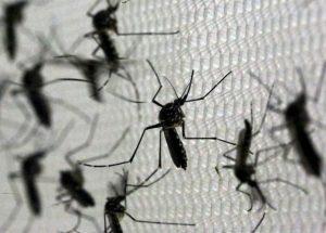 zika-brazil-620x445-300x215 Inibidor do vírus Zika deve levar 10 anos para ser produzido em larga escala