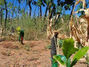 17930436280003622710000-1-300x225 Sertão da PB terá 'quintais produtivos' para agricultura familiar sustentável