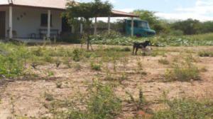 manu-300x167 Em Monteiro: Residência de tio da Prefeita de Monteiro é roubada duas vezes em menos de dois meses