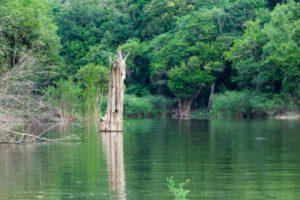 size_960_16_9_amazonas-300x200 Avião do Greenpeace cai no Amazonas e mata uma pessoa