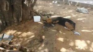 cachorro-envenenado-300x169 Moradores relatam envenenamento de cachorros e gatos em bairro de Monteiro