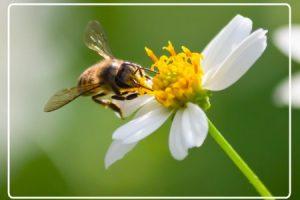 d8e33093ef9c7d29b69a2467fdc7c625-pesquisa_sobre_abelha-01-300x200 CNPq seleciona projetos de pesquisa sobre polinizadores