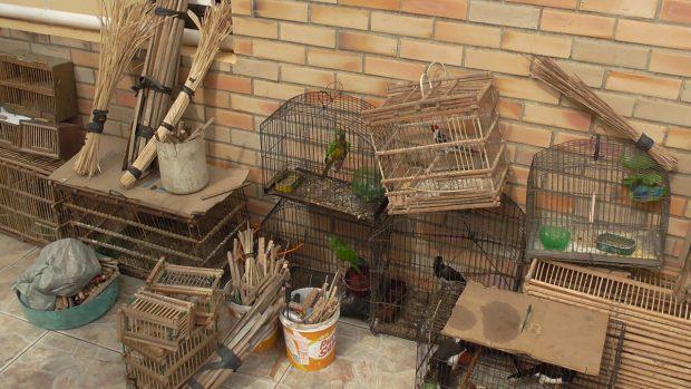 resgate-aves-620x349 Polícia deflagra operação, resgata 72 aves silvestres e prende duas pessoas na Paraíba