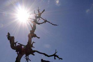 seca1-300x201-300x201 Quase metade dos municípios decretou emergência ou calamidade, diz ANA
