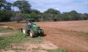 A-Prefeitura-Municipal-de-Zabelê-realiza-corte-de-terra-para-agricultores-1-300x180 A Prefeitura Municipal de Zabelê realiza corte de terra para agricultores
