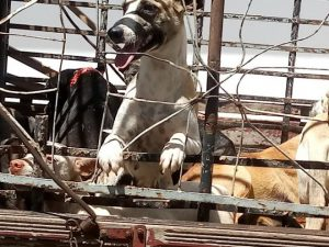 cachorro-300x225 Mais de 50 cachorros são encontrados mortos a paulada e envenenados, em cidade do Vale do Piancó