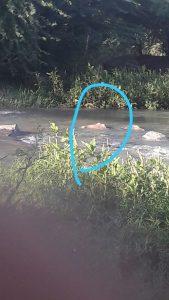 corpo-encontrado-no-rio-paraiba-169x300 Homem é encontrado mortono Rio Paraíba em Monteiro.