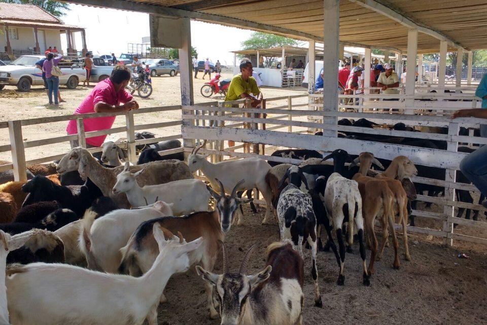 feira_animais_1-960x640 Feira de Animais de Monteiro supera todas as expectativas e bate recorde de comercialização