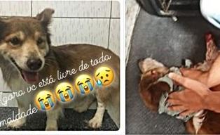 foice_cachorro_uirauna-1 Cachorro é morto com golpes de foice na Paraíba; Relato viraliza e revolta internautas