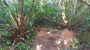 local-ossada-300x169 Ossada encontrada em mata de João Pessoa é de menino Guilherme, diz IPC