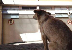 sdddd-620x429-300x208 Na esperança de reencontrar o dono com vida, cadela acampa na porta de hospital na PB
