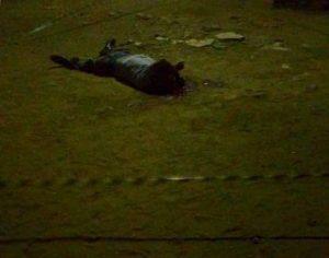 003-14-300x236-300x236 Suspeito de assalto mata comparsa após roubarem casal e idosa em Sumé