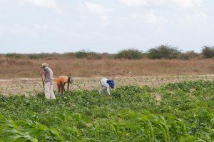mda_mossoro_rn_2006_029-me-300x199 7 municípios do cariri ainda não pagaram contrapartida do Garantia Safra