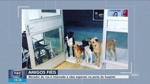 7226258_x720-520x293 Cães aguardam na porta de hospital após dono dar entrada na unidade