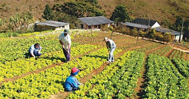 1814168-520x273 Governo incentiva instalação de agroindústrias para fortalecer a agricultura familiar