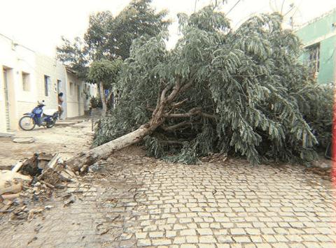 ARV Ventania forte derruba árvores, tetos e provoca estragos na região do Cariri