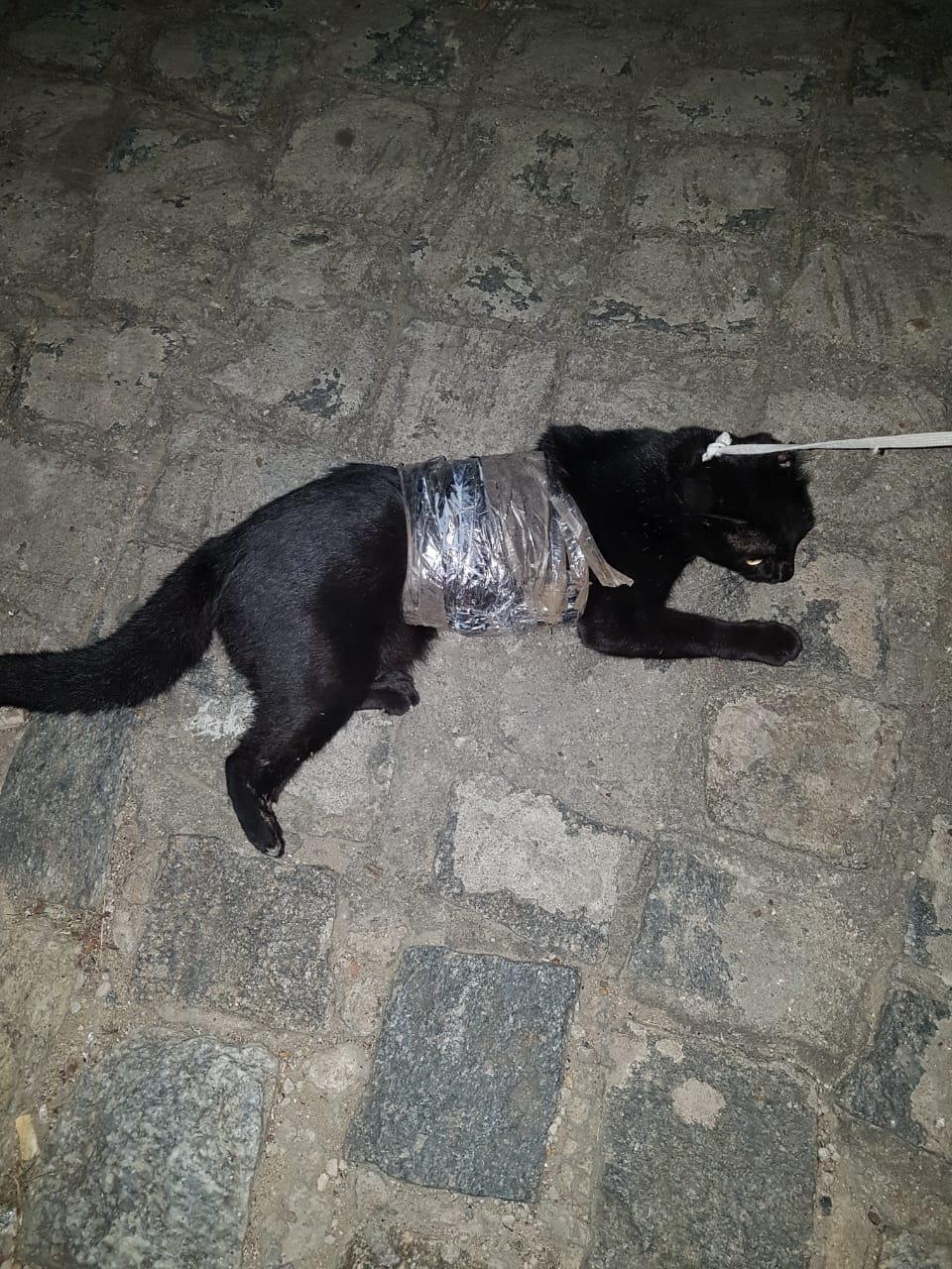WhatsApp-Image-2019-01-28-at-12.58.54-285x380 Gato é flagrado transportando drogas para presídio da PB
