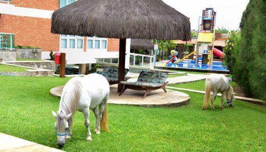 poneis-1-700x400-520x297 Promoção Viajem do sonhos Estrepolia Kids