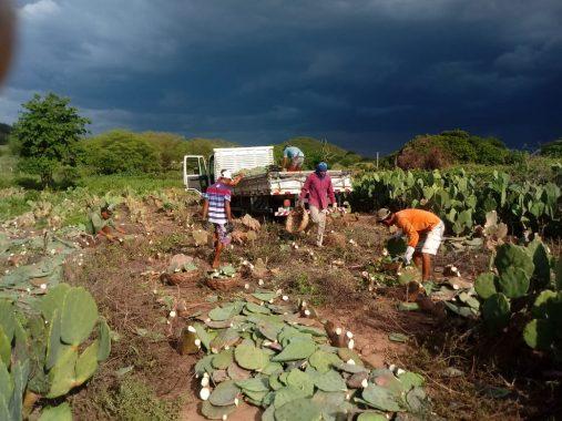Distribuição-de-palmas-continuam-com-associações-de-comunidades-rurais-em-Monteiro2-507x380 Distribuição de palmas continuam com associações de comunidades rurais em Monteiro