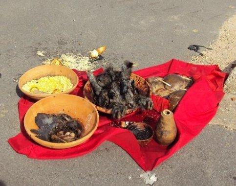 despacho-483x380 STF confirma validade do sacrifício de animais em cultos religiosos