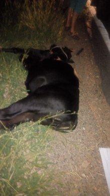 IMG-20190426-WA0251-219x390 Acidente entre animal e moto deixa vitima fatal em Monteiro