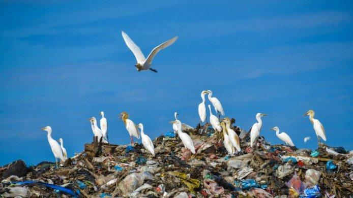 terra-694x390 Planeta pede socorro terra perdeu 40% dos animais desde 1970