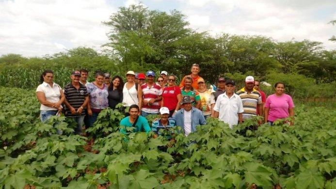 AGGEICULTORES-ALGODAO-693x390 Plantações de algodão do Cariri são experiências em sistemas agroalimentares