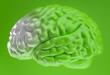 Estudo: composto do chá verde restaura memória em ratos com Alzheimer