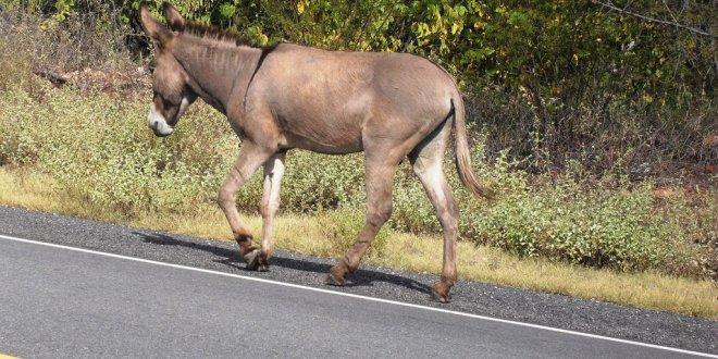 Animais na pista provocam mais um acidente entre Congo e Camalaú
