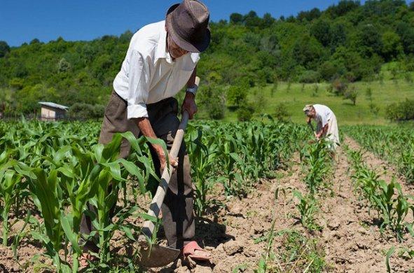 rural-sindicato-591x390 Wilson lamenta aprovação de MP que exclui sindicatos rurais das aposentadorias dos agricultores