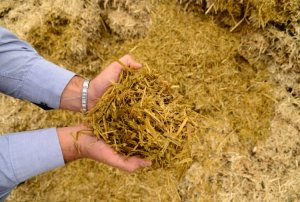 silagem Secretaria de agricultura de Monteiro realiza serviços na zona rural do município