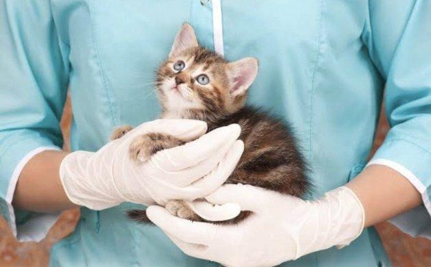 """castracao-gatos-629x390 Clínica """"Cães e Gatos"""" oferta castração gratuita à animais de rua"""