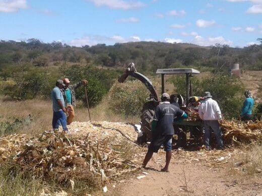 3f23d2f0-acf5-4672-80ac-8ff561fc9e10-520x390 Prefeitura de Zabelê da suporte a produção de silo para agricultores
